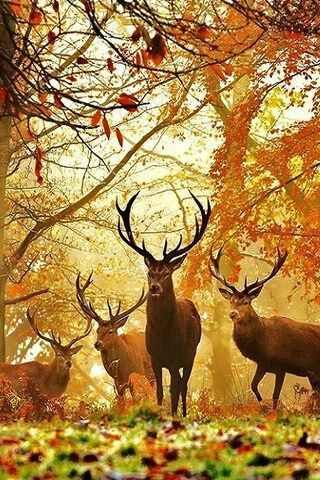 Deer in Fall